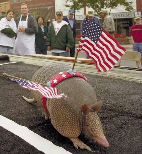 Patrioticdillo